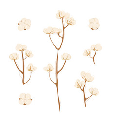 cotton branch with flowers on white background vector image