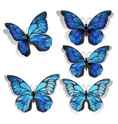 Set Blue Butterflies Morpho vector