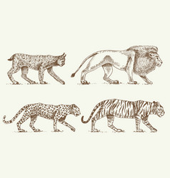 wild cats set lynx lion leopard and tiger vector image