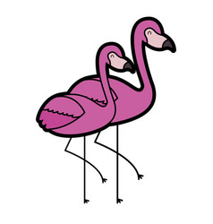 Two flamingo bird exotic tropical animal image vector