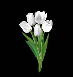 White tulips on a black background vector