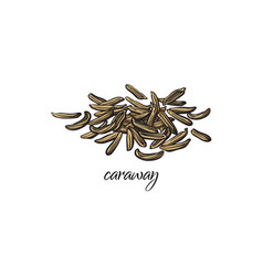 Pile heap of dried caraway cumin seeds vector