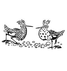 ruff bird vector image
