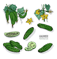 set of different cucumber on branch flowering vector image