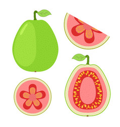 Slices of guava whole exotic fruit flat cartoon vector