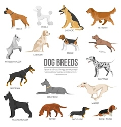 Dogs breed set vector image