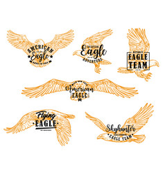 Eagle hawk or falcon birds with letterings vector