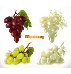 grapes 3d realism and engraving styles vector image