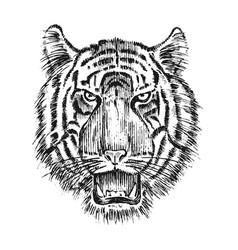 japanese wild tiger asian animal cat profile vector image