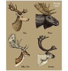 Reindeer moose eurasian elk doe roe deer and vector