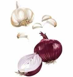 onion garlic vector image