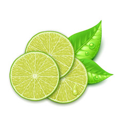 lime slice vector image