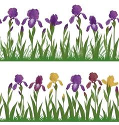 Flowers iris and grass set seamless vector