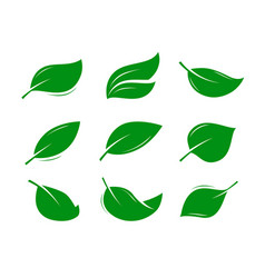 green leaf logo or label natural product nature vector image