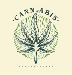 leaf cannabis engraving shine vintage vector image