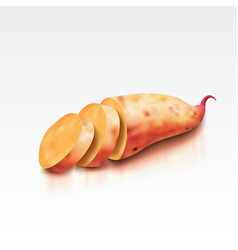 realistic sweet potato on a white background vector image