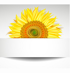 Sunflower Banner Design vector image