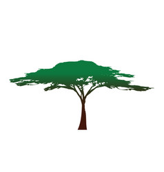 african tree icon acacia tree silhouette isolated vector image