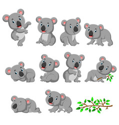 collection happy koala with various posing vector image