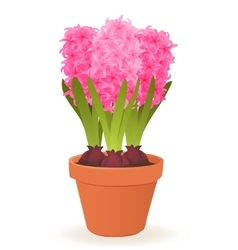 Hyacinth flower pot vector