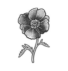 Poppy flower sketch vector