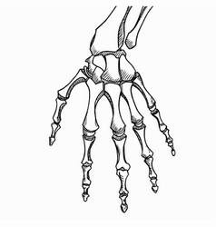 skeleton hand sketch with hand bones vector image
