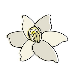vanilla flower icon image vector image