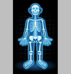 x-ray vector image
