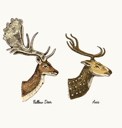 roe deer or doe axis or indian dotted hand vector image vector image
