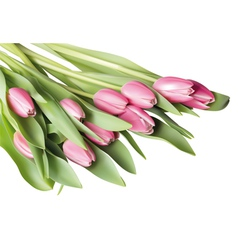 Pink tulip vector