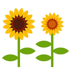 Sunflowers symbol vector image vector image