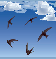 Birds in sky vector
