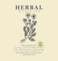 Botanical a hand drawn chamomile vector
