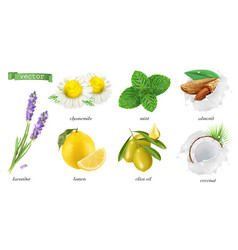 medicinal plants and flavors chamomile mint vector image