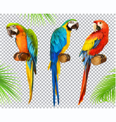 ara parrot macaw photo realistic 3d icon set vector image