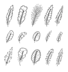 Hand drawn vintage feathers set Pen graphic vector image vector image
