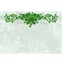wall with ivy vector image vector image