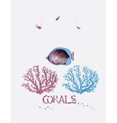Corals and fish vector image