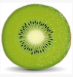 exotic kiwi with fresh water drops vector image