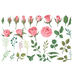 Rose elements pink flower buds roses with green vector