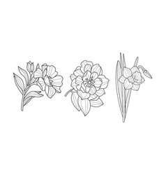 set blooming garden flowers botanical vector image