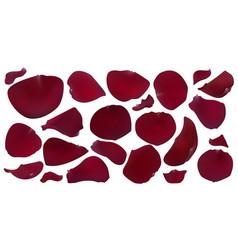 A set of dark red rose petals vector
