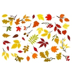 Autumn leaves acorns and tree branches vector