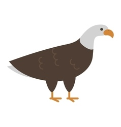 Bald eagle bird vector