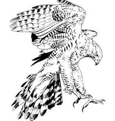 bird prey eagle hawk falcon vector image