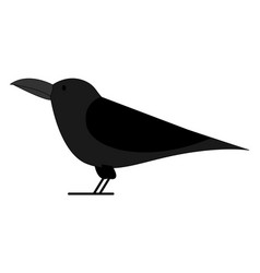 black crow on white background vector image