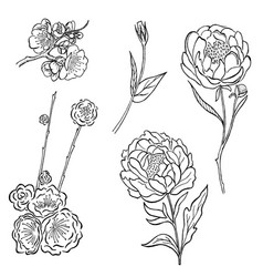 collection hand drawn peony and rose vector image