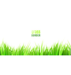 grass seamless border with fresh green tufts vector image