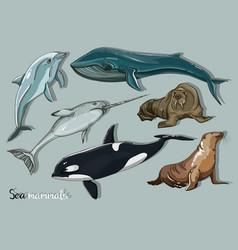 Sea mammals animal collection icons set vector