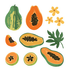 summer set with papaya vector image